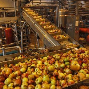 Food-Processing-sector-Reu.jpg